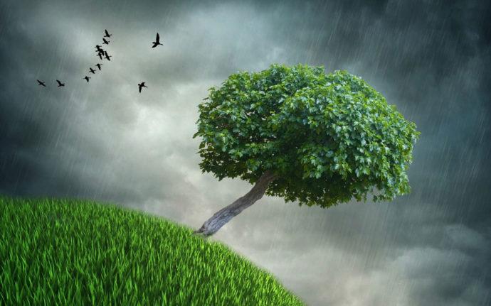 deszcz-drzewo-trawa-ptaki